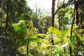 Tropische plantenkas (VWO 1 2004-I)