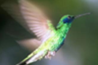 Kolibrie (VWO 1 2007-II)