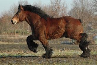 Touwtrekken met een paard