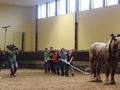 Hoe sterk is paard
