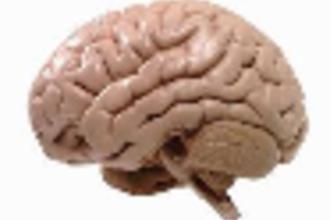 Harmonie in de hersenen