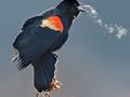 Adempluim vogel