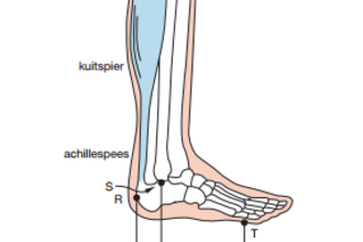 De voet (biofysica)