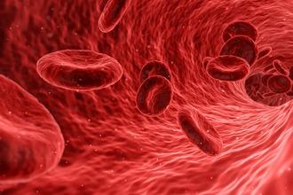Rekenen aan bloedvaten (biofysica)