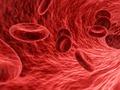 Bloed tn